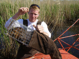 Student trapping muskrat