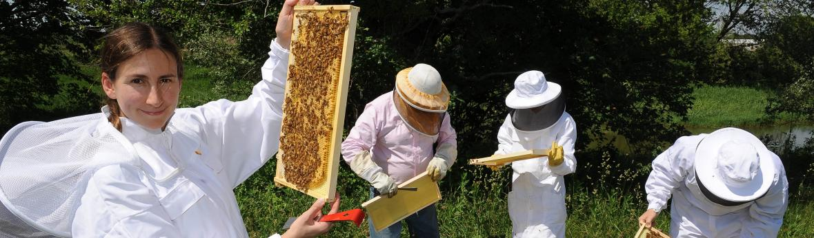 Amy Toth and researchers in the field with bees banner image